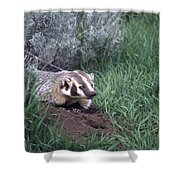 Badger In Yellowstone Shower Curtain