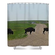 Badlands Buffalo Shower Curtain