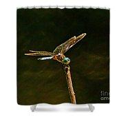 Balancing Dragonfly Shower Curtain