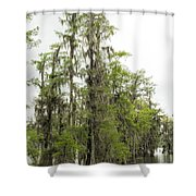 Bald Cypress - Axodium Distichum Shower Curtain
