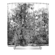 Bald Cypress Swamp In Black And White Shower Curtain