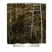Bald Cypress Trees Shower Curtain