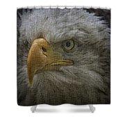 Bald Eagle 26 Shower Curtain