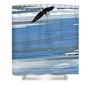 Bald Eagle 2832 Shower Curtain