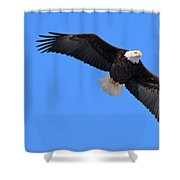 Bald Eagle 3772 Shower Curtain