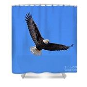 Bald Eagle 3773 Shower Curtain