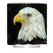 Bald Eagle-42 Shower Curtain