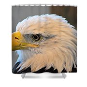 Bald Eagle 7615 Shower Curtain
