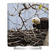 Bald Eagle And Eaglet Shower Curtain