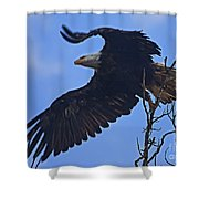 Bald Eagle At Take Off   #6109 Shower Curtain