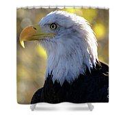 Bald Eagle Beauty Shower Curtain