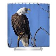 Bald Eagle Calling Shower Curtain