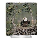 Bald Eagle Calling On Nest Alaska Shower Curtain