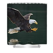 Bald Eagle Catching Fish Shower Curtain by John Hyde
