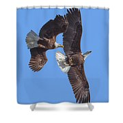Bald Eagle Chase Over Pohick Bay Drb148 Shower Curtain