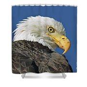 Bald Eagle Closeup Shower Curtain