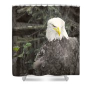 Bald Eagle Shower Curtain by Dawn Gari
