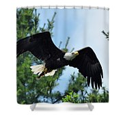 Bald Eagle Feeding 2 Shower Curtain