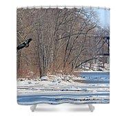 Bald Eagle Fledgling Near Ludwig Mill 2576 Shower Curtain