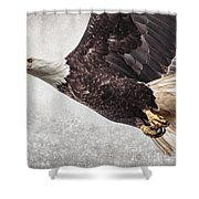Bald Eagle Fly By Shower Curtain