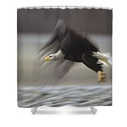 Bald Eagle Flying Alaska Shower Curtain