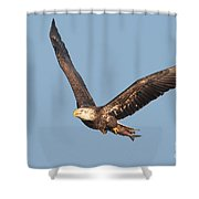 Bald Eagle Flying With Fish Shower Curtain