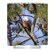Bald Eagle Grooming Shower Curtain