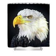 Bald Eagle Hailaeetus Leucocephalus Wildlife Rescue Shower Curtain