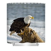 Bald Eagle Homer Spit Alaska Shower Curtain