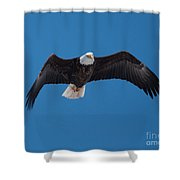 Bald Eagle In Flight 4 Shower Curtain