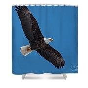 Bald Eagle In Flight 5 Shower Curtain