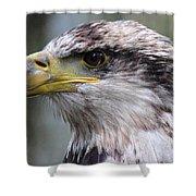 Bald Eagle - Juvenile - Profile Shower Curtain