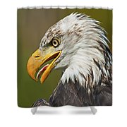 Bald Eagle... Shower Curtain