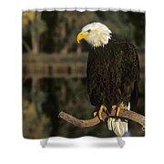 Bald Eagle On Dead Snag Wildlife Rescue Shower Curtain