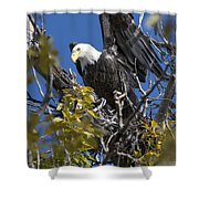 Bald Eagle On Nest Near The Oxbow Shower Curtain