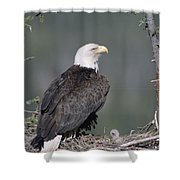Bald Eagle On Nest With Chick Alaska Shower Curtain by Michael Quinton