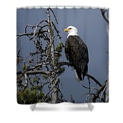 Bald Eagle On Watch Shower Curtain