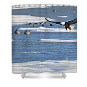 Bald Eagle Over Maumee River 2456 Shower Curtain