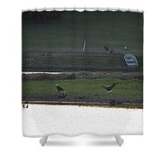 Bald Eagle Pair With Turkey Strutting Shower Curtain
