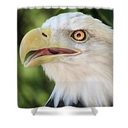 American Bald Eagle Portrait - Bright Eye Shower Curtain