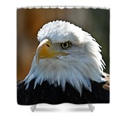 Bald Eagle Pose Shower Curtain
