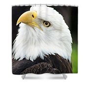 Bald Eagle - Power And Poise 01 Shower Curtain