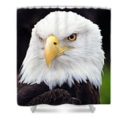 Bald Eagle - Power And Poise 02 Shower Curtain
