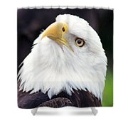 Bald Eagle - Power And Poise 03 Shower Curtain