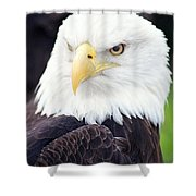 Bald Eagle - Power And Poise 04 Shower Curtain