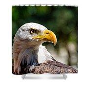 Bald Eagle Profile Shower Curtain
