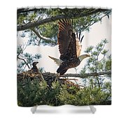 Bald Eagle With Eaglet Shower Curtain