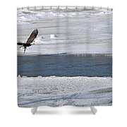 Bald Eagle With Fish 3655 Shower Curtain
