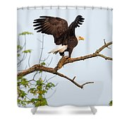 Bald Eagle With Fish Shower Curtain