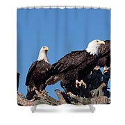 Bald Eagles Quartet Shower Curtain